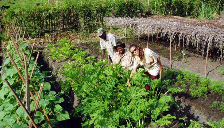 Pointe noire restaurant potager et ferme bio for Le jardin potager bio